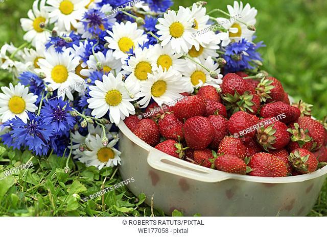 Plastic bowl with strawberrry next to wild flowers