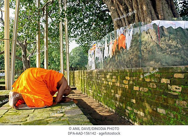 Monk praying at Buddhist site ; Sarasvati ; Uttar Pradesh ; India