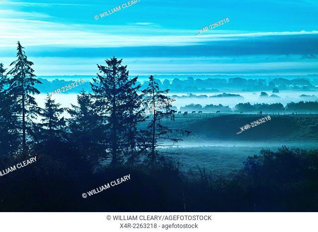 Foggy morning, Loughnavalley, County Westmeath, Ireland