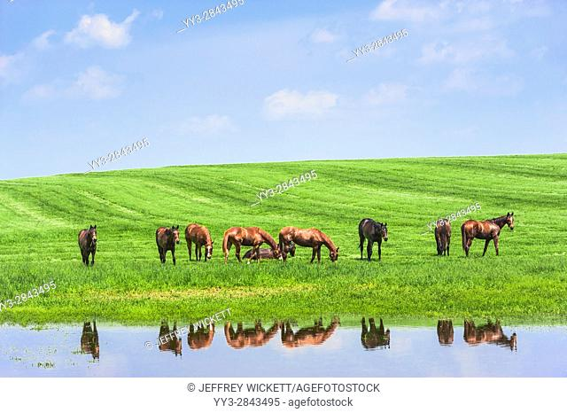 Horses grazing. Scenic highway in Franklin County, Kentucky, USA