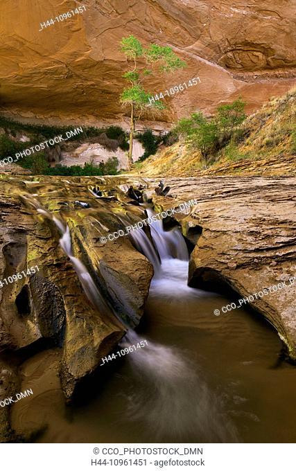 canyon, Coyote Gulch, UT, Utah, USA, America, United States, spring, wash, bottom, cottonwood, cottonwoods, desert varnish, trail, path, pathway, gulch