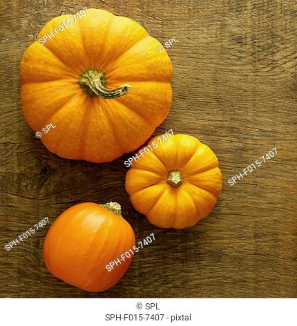 Cinderella pumpkin (Cucurbita Moschata) and Jack be little miniature (Cucurbita pepo) pumpkins, still life