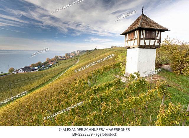 Winzerturm tower above Haltnau winery near Meersburg, looking towards Lake Constance, Bodenseekreis district, Baden-Wuerttemberg, Germany, Europe