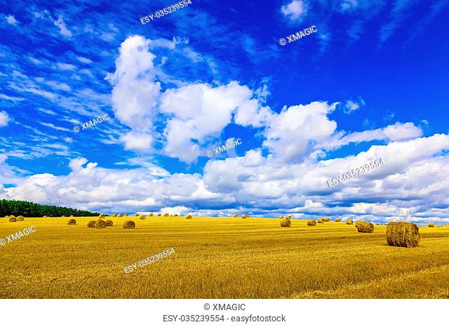 Yellow, Round Straw Bales in a Field at end of Summer at Day with Clouds and Blue Sky after Harvest