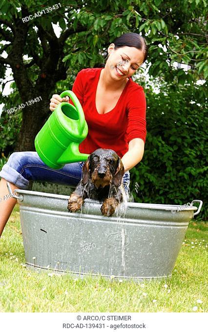 Woman bathing Labrador Retriever in tub watering can garden wet