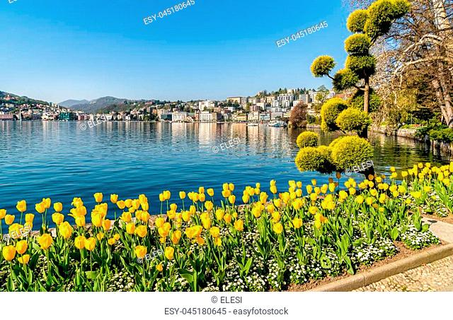 Landscape with Lake Lugano and colorful tulips in bloom from Ciani Park in springtime, Switzerland
