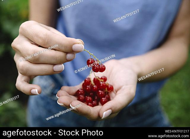 Young woman harvesting red currants