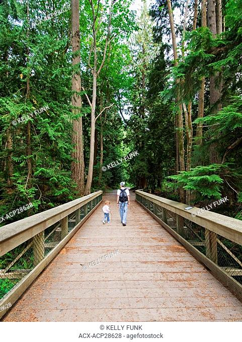 A father and daughter enjoy a walk through a cedar forest near Powell River, on the Sunshine coast of the Vancouver coast and mountain region of British...