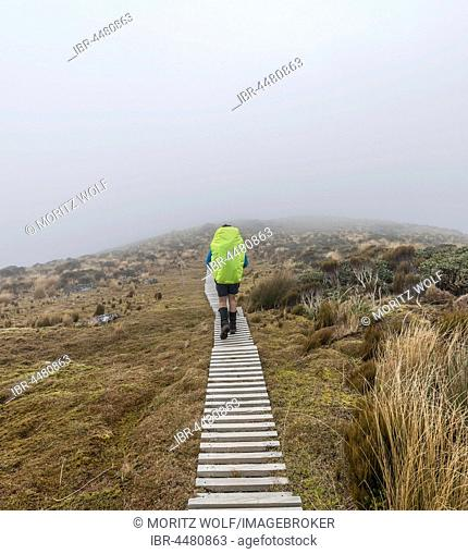 Hiker in mist, trail through swampland, Pouakai Circuit, Egmont National Park, Taranaki, North Island, New Zealand