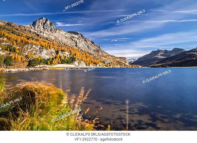 Autumn at Lake Sils, Engadine, Canton of Graubunden, Switzerland, Europe
