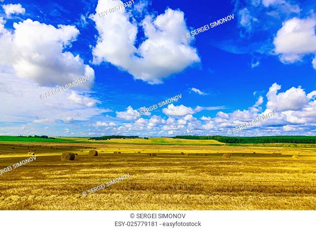 Round Straw Bales in a Field at end of Summer at Day with Clouds after Harvest
