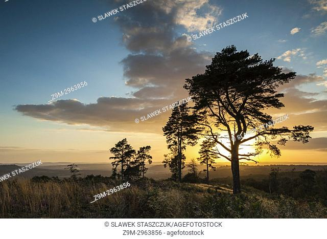 Sunset at Blackdown, South Downs National Park, West Sussex, England
