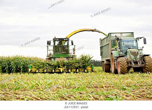 Tractor trailer being filled with harvested maize in field
