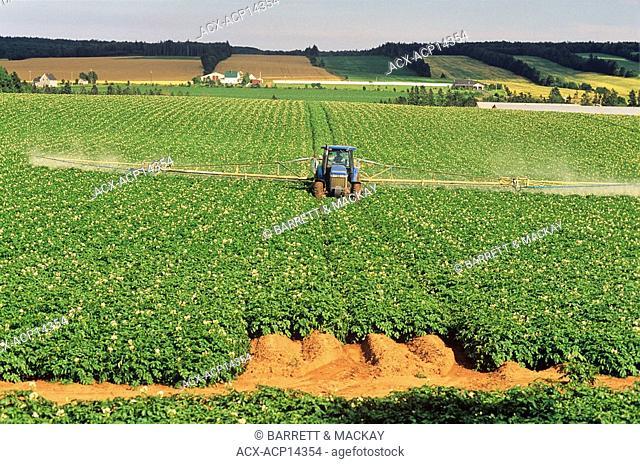 Tractor Spraying potatoes, Lower Newtown, Prince Edward Island, Canada