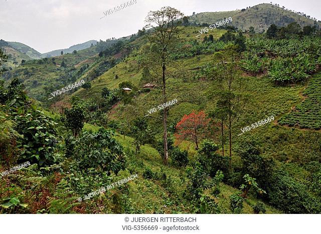 UGANDA, BUHOMA, 17.02.2015, Hills with fields near Bwindi Impenetrable National Park, Uganda, Africa - Buhoma, Uganda, 17/02/2015