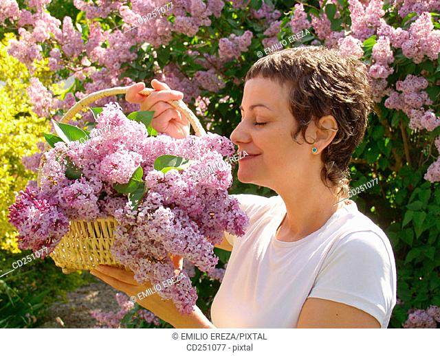 Common Purple Lilac (Syringa vulgaris)