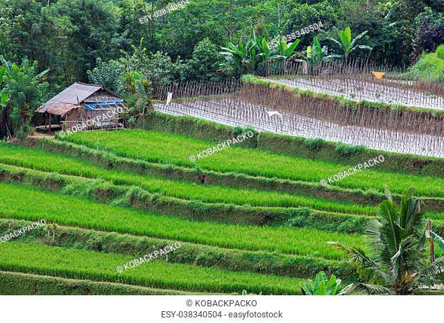 Beautiful rice terraces on Bali Indonesia