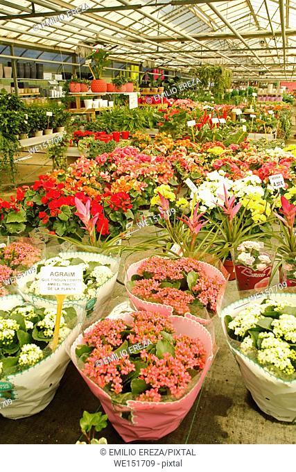 Flowerpots in a garden denter
