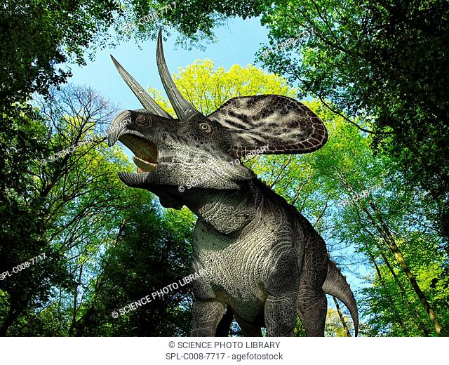 Zuniceratops dinosaur. Computer artwork of a 113Kg, 10 foot 3 metres long Zuniceratops wandering in a forest during the Late Cretaceous period around 65 to 100...