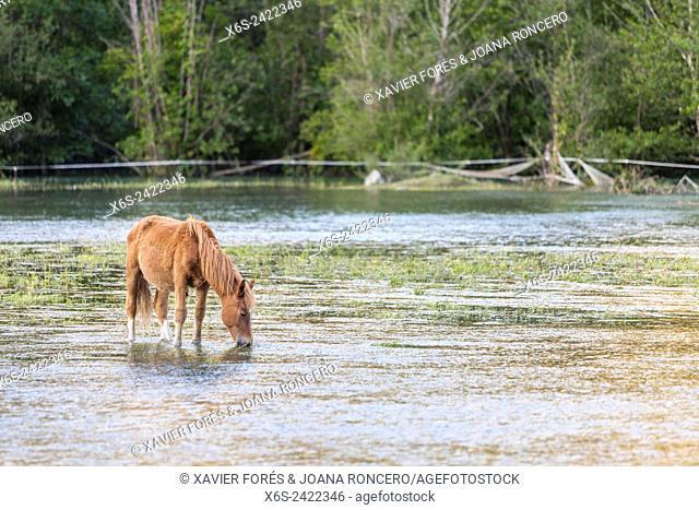 Horses at Esterri d'Aneu, Lleida, Spain