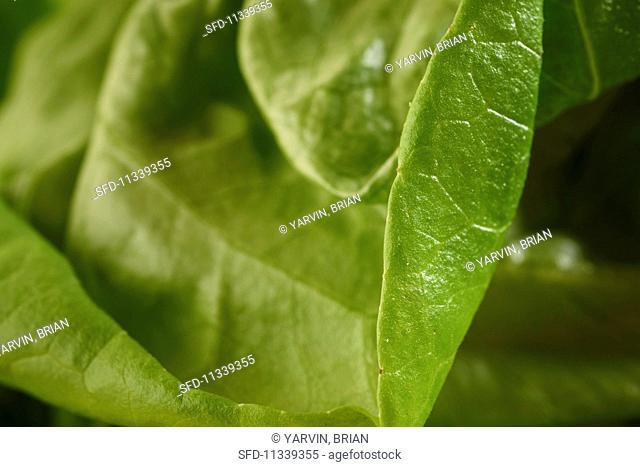 Green salad leaves (close-up)