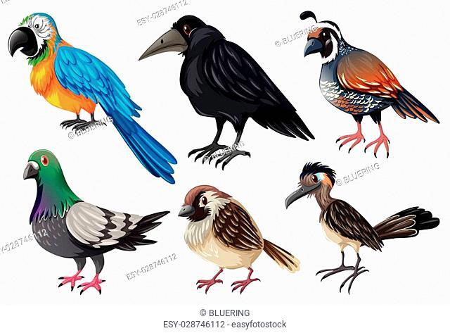 Different kind of wild birds illustration
