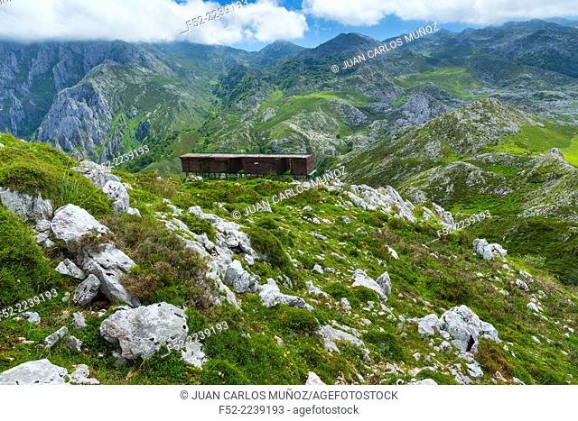 Reintroduction project of Bearded Vulture in the Cantabrian Mountains , Picos de Europa National Park, Asturias, Spain, Europe