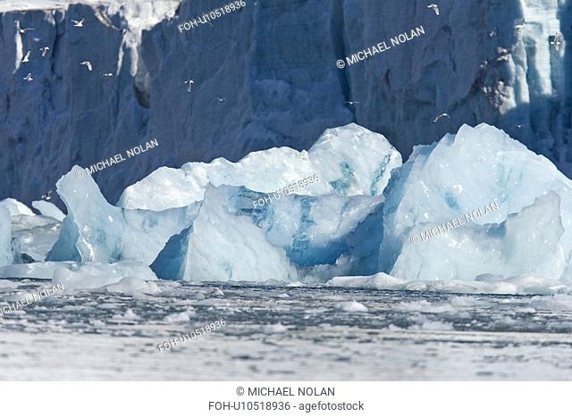 A huge shooter of ice calved from under the Storpollen Glacier, on the southwestern side of Spitsbergen Island in the Svalbard Archipelago, Barents Sea, Norway