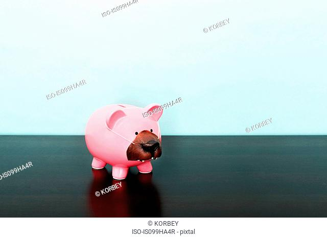 Piggy bank with bears nose