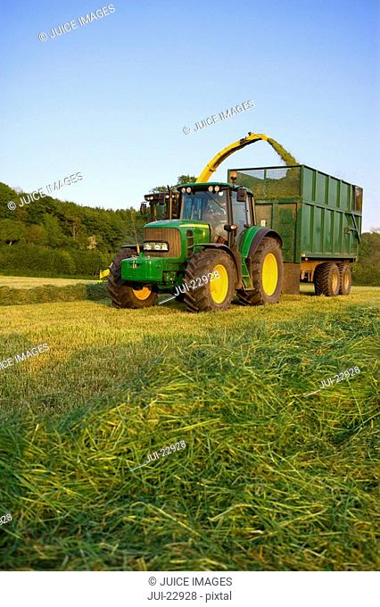 Tractor cutting silage and filling trailer in field