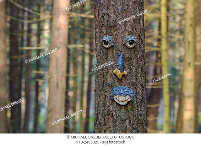 Face on tree, Hesse, Germany, Europe