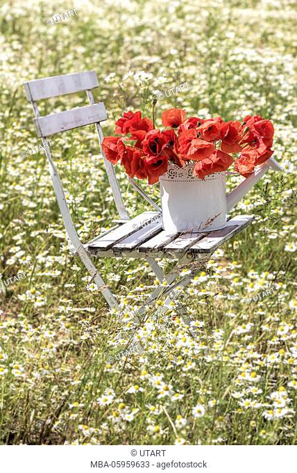 White folding chair, pot with poppies in a camomile field