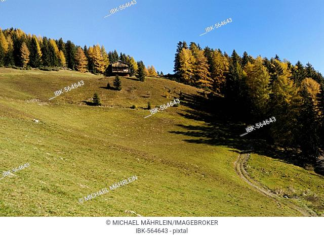 Forest in autumn and grassland with barrack on the hill, Puster Valley, South Tyrol, Italy