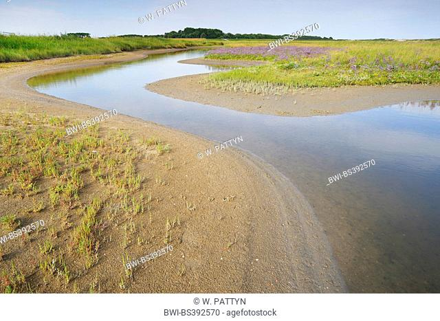mudflats in the Zwin nature reserve, Belgium, Knokke