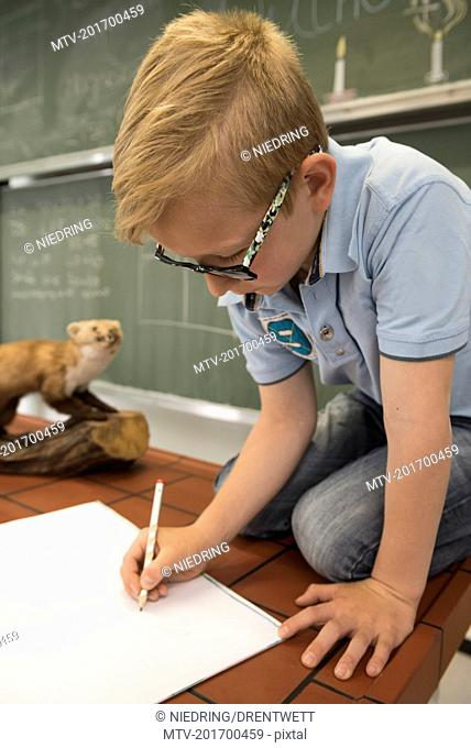 Schoolboy making drawing of a marten in biology class, Fürstenfeldbruck, Bavaria, Germany