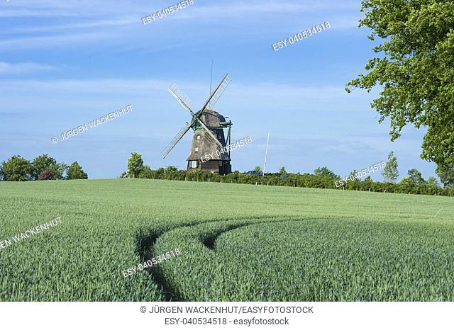 Farver Mill, Wangles, Baltic Sea, Schleswig-Holstein, Germany, Europe