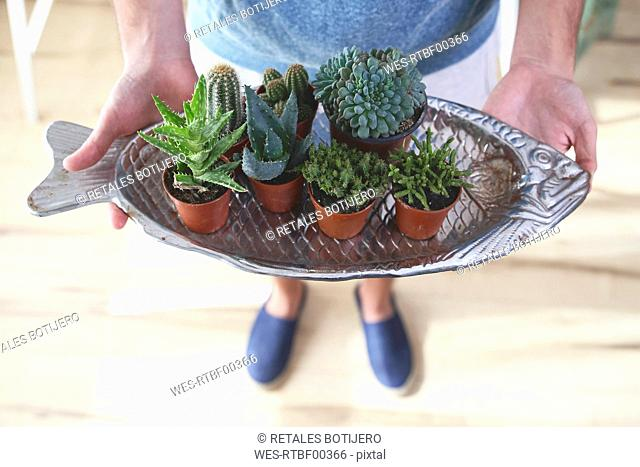 Young man with fish-shaped cacti tray
