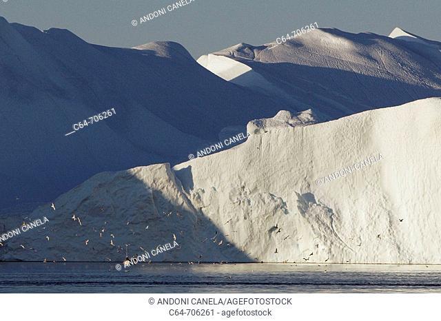 Icebergs from the Jacobshaven glacier. Isbrae. Ilulissat. Disko Bay. Greenland