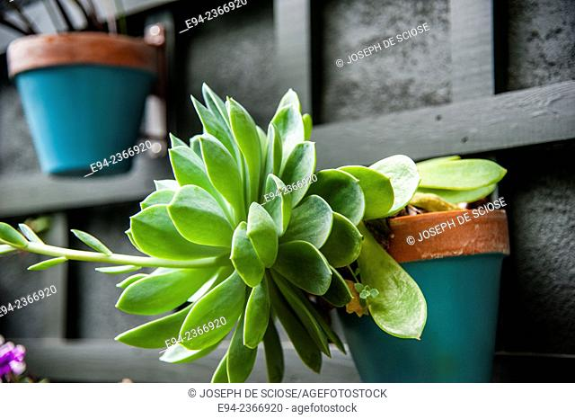 Succulent plant growing in a pot mounted to a wall