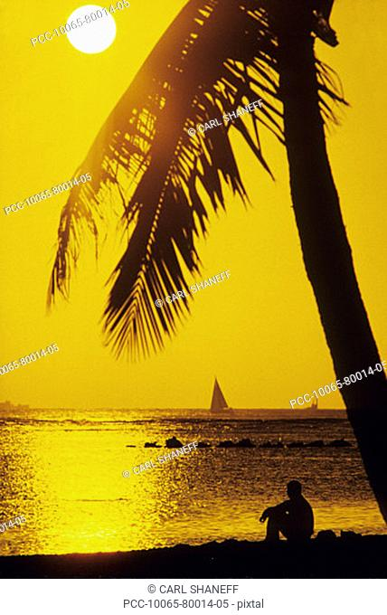 Silhouette of man sitting under palm tree looking out at the ocean at sunset, large sunball in yellow sky