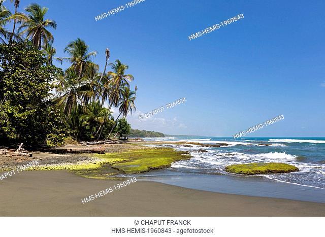 Costa Rica, Limon Province, Caribbean coast, Cahuita, Playa Negra beach