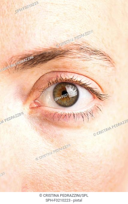 Close-up of woman's green eye