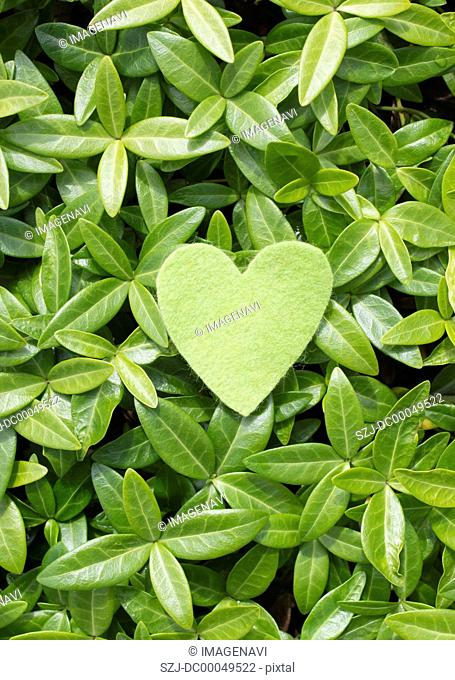 Leaves and heart-shaped felt