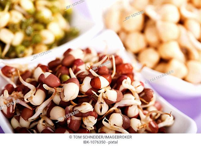 Chick pea, mung bean and azuki bean sprouts