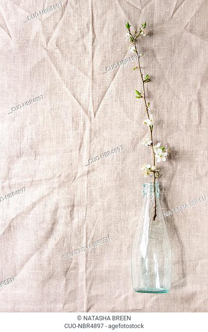 Spring white pear blooming branch in blue glass bottle over table with linen tablecloth. Womens day holiday greeting card