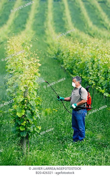 Farmer treating plant with sprayer (insecticide, pesticide, Copper sulphate). Txakoli vineyards. Gipuzkoa, Euskadi. Spain