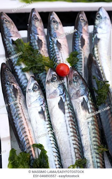 mackerels, mediterranean fish at market in Naples, Italy