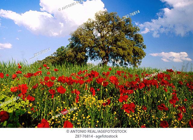 Flowers and tree near Almansa. Albacete province, Castilla-La Mancha. Spain