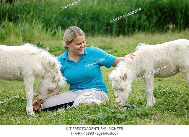 woman and Miniature Shetland Ponies