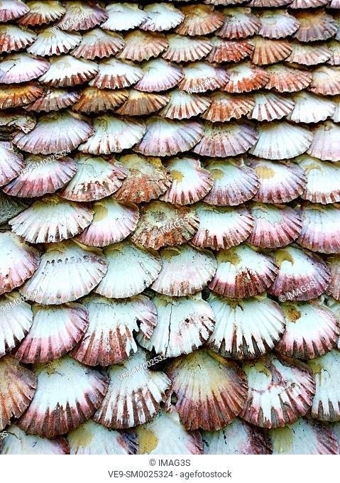 Oysters in the façade of La Toja church, O Grove, Pontevedra province, Galicia, Spain